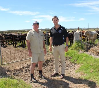 Campbell Nettleton & Graham Manning Harvey Beef