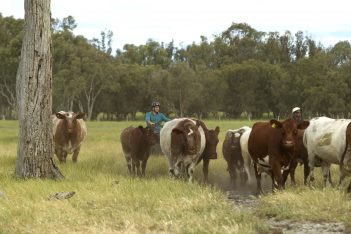 Curtis Stone on Stuart McCormack's farm - Harvey Beef